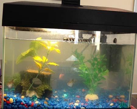 мутная вода в новом аквариуме что нужно делать