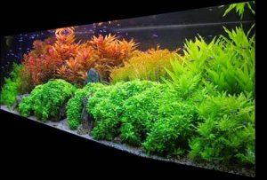 контрастные растения