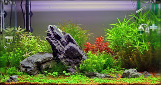 камни и коряги в пресноводном аквариуме