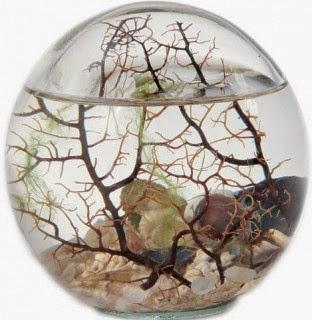 аквамир за стеклом