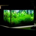 растения и декорации для аквариума