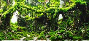 Мох на коряге тропический лес