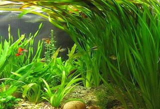 проблемы с аквариумными растениями