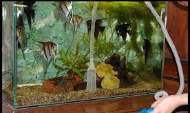 как сифонить аквариум