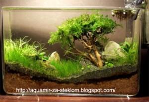 как сделать дерево в аквариуме фото15