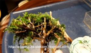 как сделать дерево в аквариуме фото7