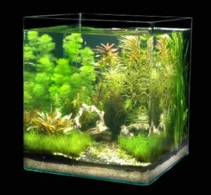 аквадизайн в нано аквариуме