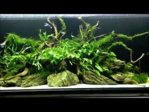 биотоп с неонами
