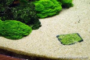 камень с сеткой и риччией в аквариуме