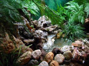 Террариум с лягушками