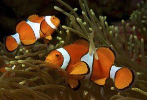 Совместимость (соседи по аквариуму)