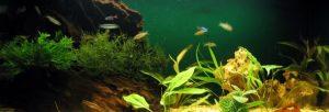 Лучшие рыбки для начинающих для домашнего аквариума