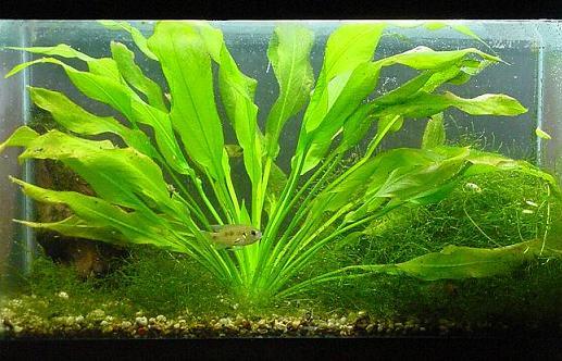 Каталог аквариумных растений
