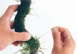 мох на коряге