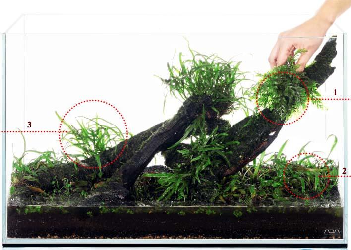 Бизнес по выращиванию вишни 23