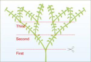 уровни обрезки растений
