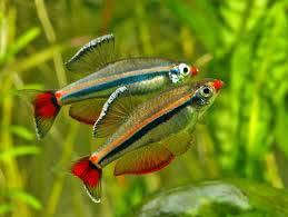 Каталог аквариумных рыб