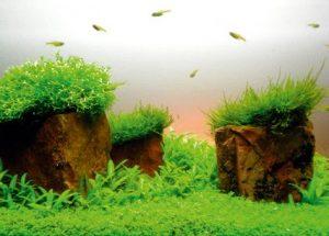 Аквадизайн аквариум 20 литров