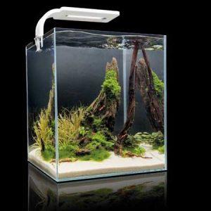 Аквариум 20 литров с живыми растениями и креветками